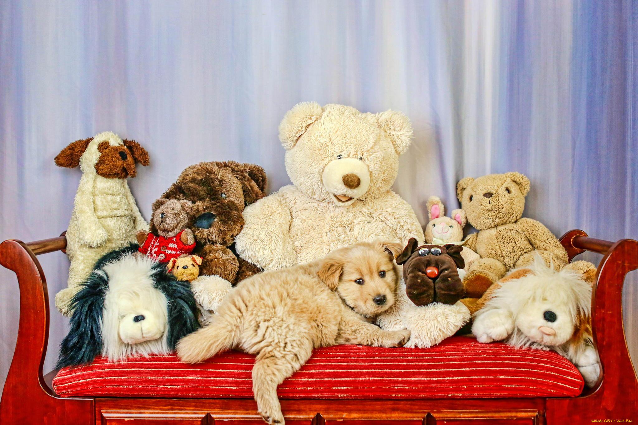 Картинки животное не игрушка